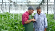 Two men using digital tablet in greenhouse