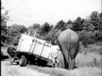 B/W MONTAGE 1940 Two men with elephant pushing truck from ditch into road / USA