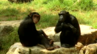 Two monkey sitting on the stones