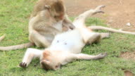 Two Monkey's Grooming
