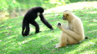 Two monkeys sitting in the grass