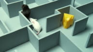 HA, MS, Two mouse and peace of cheese in maze