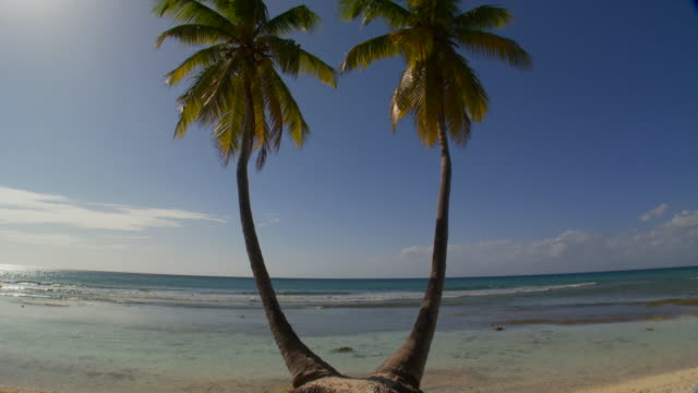 MS, TD, Two palm tress on Caribbean beach, Saona Island, Dominican Republic