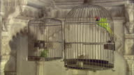 CU Two parrots perching in bird cages inside Lake Palace / Udaipur, India