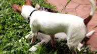 Zwei Welpen Hunde spielen