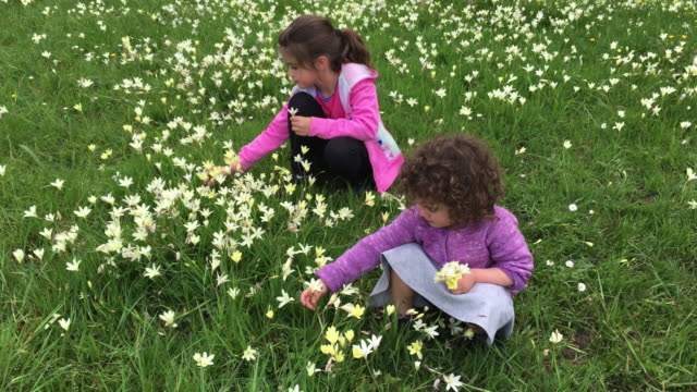Two sisters picking flowers in a field