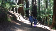 Two sisters travel and hikes in Giant redwoods forest