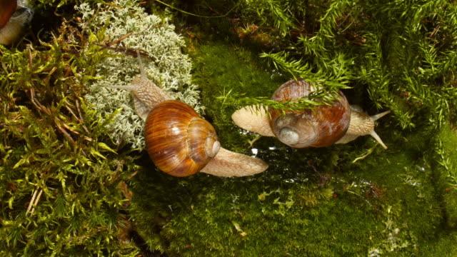 twee slakken in het bos