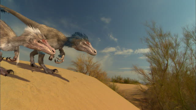 CGI, MS, Two Velociraptors walking down sand dune