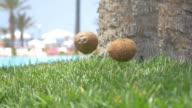 Twee video's van kokosnoten vallen op het gras in 4K