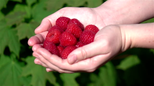 Two videos of hands holding raspberries in real slow motion