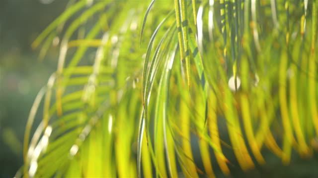 Twee video's van palm bladeren in 4K