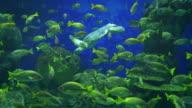 Zwei videos von reef in 4 K