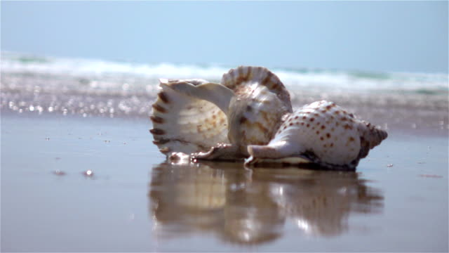 Two videos of shell by the ocean-real slow motion