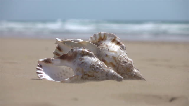 Two videos of shells on the sand-real slow motion
