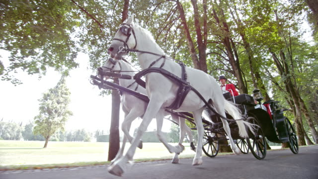 SLO MO TS Two white horses pulling a carriage