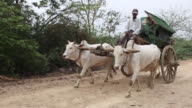 WS TS two white water buffalo pulling a cart  / Mandalay, Mandalay Division, Myanmar