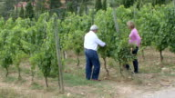 MS Two winery owners examining vines / Montecarlo, Tuscany, Italy