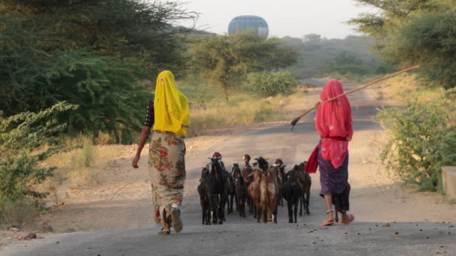 Two women in tradition Indian dresses with their cattle in Pushkar, Rajasthan with a hot air balloon in the background