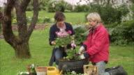 Two women potting flowers Sweden.