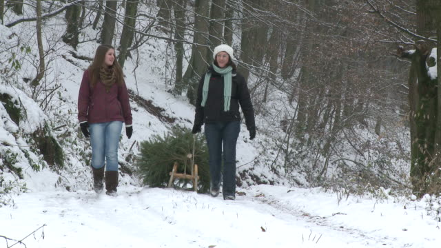MS Two women walking through forest with christmas tree on sled / Saarburg, Rhineland-Palatinate, Germany