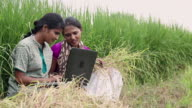 Two women working on a laptop in the farms, Haryana, India