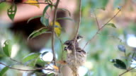 Two young birds are in nest and practice flying