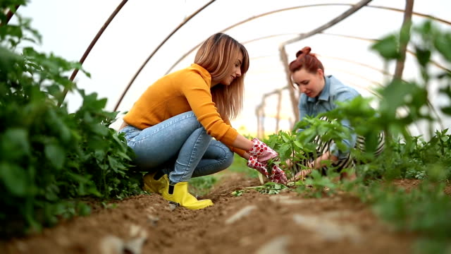 Two young women gardeners planting vegetables
