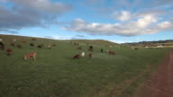A typical Mongolian pastoral landscape, with sheep and goats grazing on steppes, Mongolia