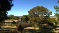 CGI, WS, Tyrannosaurus rex chasing for dinosaurs, rear view