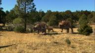 CGI, MS, Tyrannosaurus rex chasing for dinosaurs