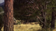 CGI, CU, Tyrannosaurus rex walking in field, headshot