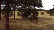CGI, MS, Tyrannosaurus rex walking in field