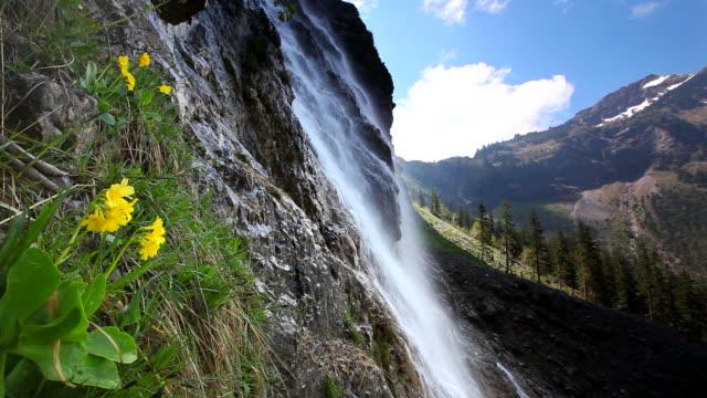 tyrolean cascade with auricula, alps, austria, tirol