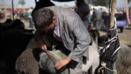 Uighur Muslim trims hair from animal at livestock market