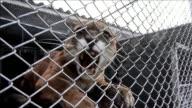 Un avion limitar libero esta semana a mas de un centenar de animales decomisados a traficantes en la selva amazonica en el oeste del pais