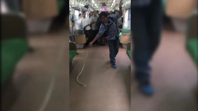 Un indonesio se convirtio en una estrella de Internet esta semana despues de que fue grabado usando solo sus manos para matar una serpiente en un...