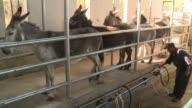 Una bebe al borde de la inanicion y la desesperacion de su madre abrieron las puertas en Chile a la produccion de leche de burra un alimento a prueba...