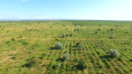 Uncultivated vineyards, aerial video