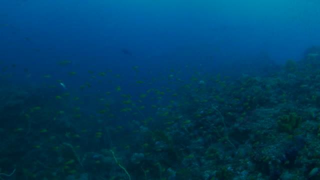 Undersea coral reef, Japan