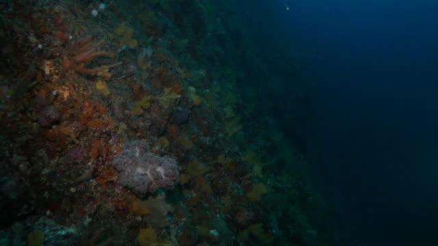 Undersea coral reef