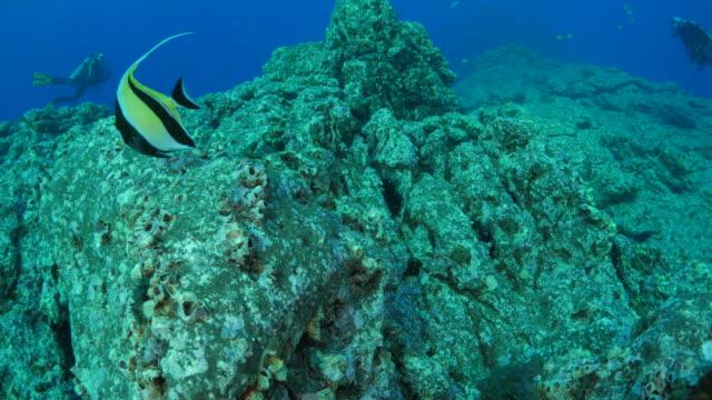 Undersea reef in subtropical sea