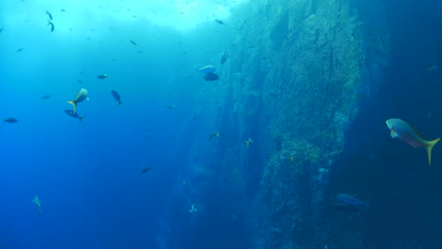 Undersea reef with school of fish
