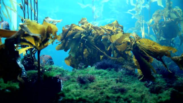 Undersea Water World