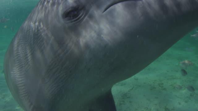 Underwater ECU Bottlenosed Dolphin eye