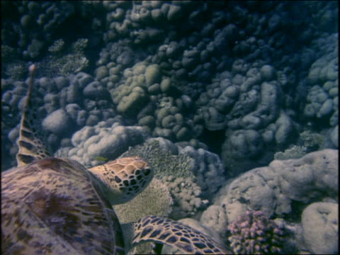 underwater close up sea turtle swimming near bottom of ocean