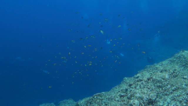 Underwater coral reef, sea life, Japan