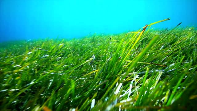Underwater grass