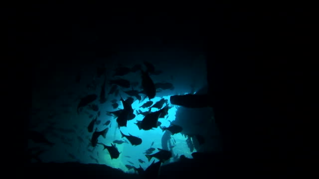 F/S underwater, inside a wreck, fish silhouettes