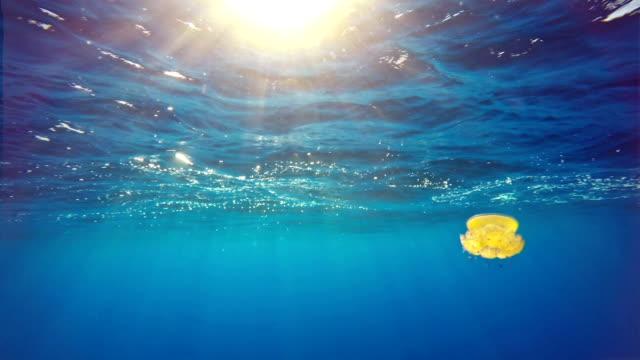 Subacqueo maestosità: Medusa in Blu giallo